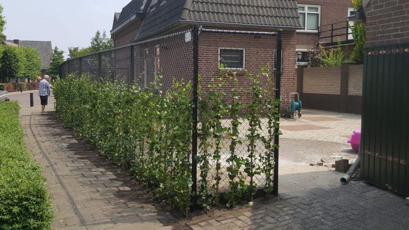 Haag plaatsen erfafscheiding